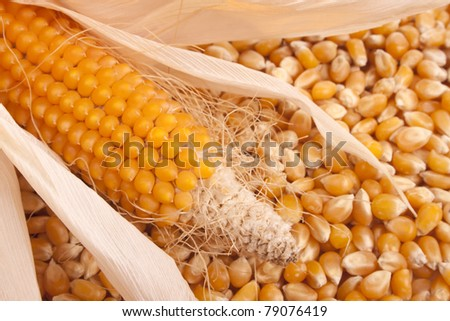Maize and corn to be used as a background