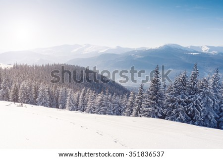 Majestic winter trees glowing by sunlight. Dramatic wintry scene. Place location Carpathian national park, Ukraine, Europe. Alps ski resort. Beauty world. Instagram toning effect. Happy New Year!