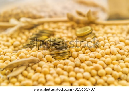 Making profit from soybean cultivation, soya bean plant, pods and beans harvested in late summer from cultivated field with golden coins, selective focus