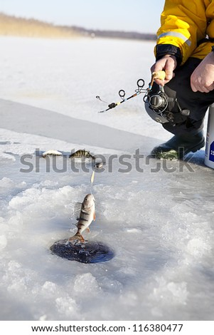 man ice fishing for the perch fish