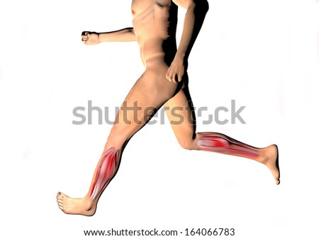 Man running muscles, calves, human Body