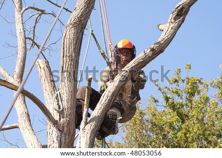 Man wearing safety harness and ropes as he saws through a dead tree