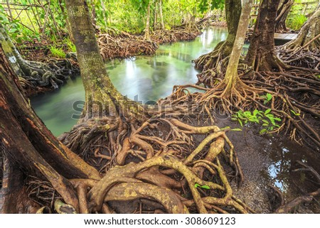 mangrove trees in a peat swamp forest at Tha pom canal area krabi province,Thailand. sRGB color profile