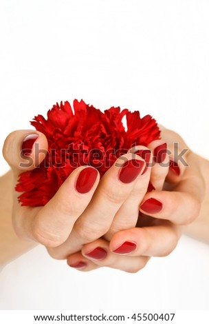 Manicured hands holding red carnation close-up