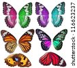 Many Colorful butterfly wing isolated on white background - stock photo