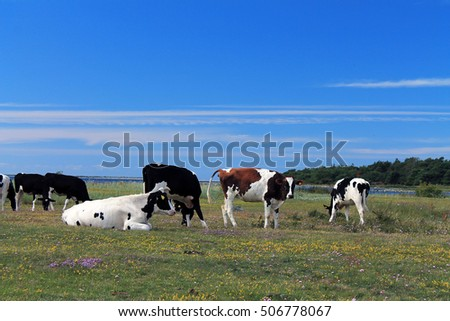 Many cows in the beautiful landscape