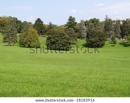 many evergreen trees by a large grass area