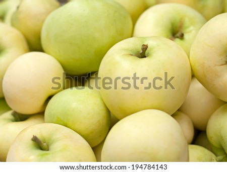 "Many fresh green apples ""Early Gold"""