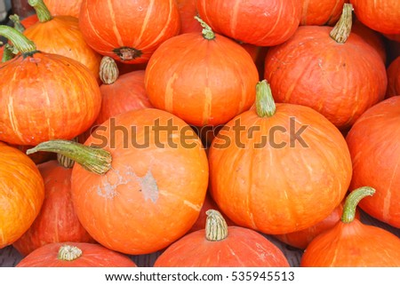 Many of the beautiful orange pumpkin lined up