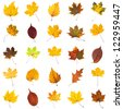 many several leaves isolated over white background - stock photo