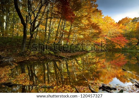 maple tree and river