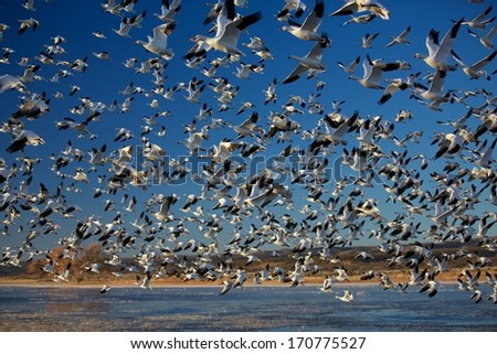 Massive Winter Migration