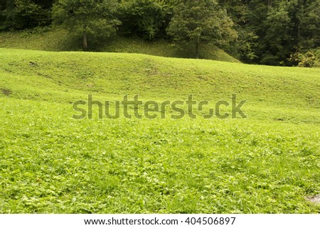 meadow and forest in Bavaria