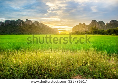 meadow at morning,Mountain background