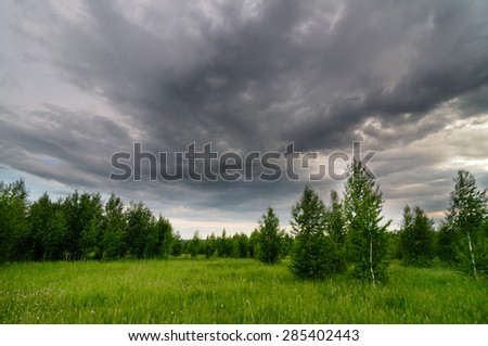 Meadow with grass and small birch trees and cloudy sky