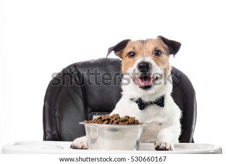 Mealtime etiquette: dog in bow tie eating food at table