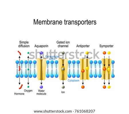 the effects of solutions on ion transportation across membranes Proteins in solution and in membrane 1- mammalian cell intracellular and extracellular ion concentration plasma membrane: functions •many cells have a charge imbalance across the transport across the pm - small molecules uniport.