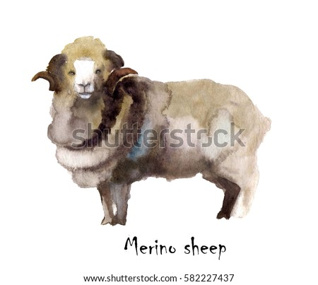 sheep ranch muslim These 5 surf trips are more than just epic waves  a spectacularly rugged and authentic working sheep ranch  adventure sports network on facebook.