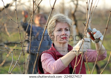 Mid adult female pruning grape in a vineyard selective focus on face