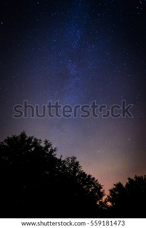 Milky way galaxy over the trees