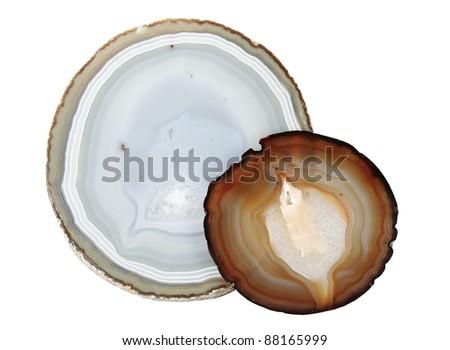 Tokobushi Abalone Shellfish Stock Photo 58071049 - Shutterstock