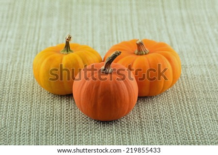 Miniature ornamental pumpkins in horizontal format with room for text