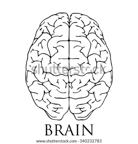 outline top view illustration human brain stock vector