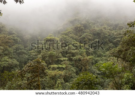 Mist blowing through humid cloud forest on the western slopes of the Andes near Mindo, Ecuador. The constant high humidity maintains a high plant biodiversity.