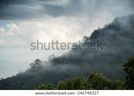 Mist on top of Angkhang, Chiangmai (North of Thailand) / Mist on top of mountain