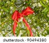 Mistletoe cutting - stock photo