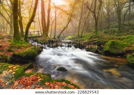 Misty Autumn morning at Golitha Falls where the River Fowey flows through woodland on the edge of Bodmin Moor in Cornwall