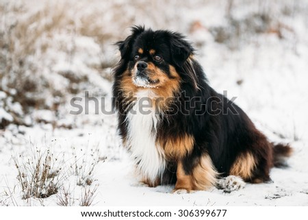 Mixed Breed Small Size Black And Brown Colors Dog Outdoor Portrait