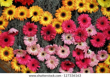 Mixed flowers background