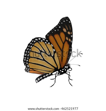 Monarch Butterfly 3D Illustration