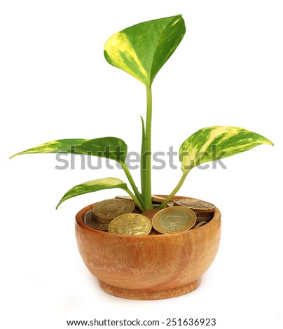 Money plant grows from coins over white background