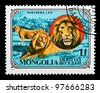 MONGOLIA - CIRCA 1979: The postal stamp printed in MONGOLIA shows a Panthera leo, series animals, circa 1979 - stock photo