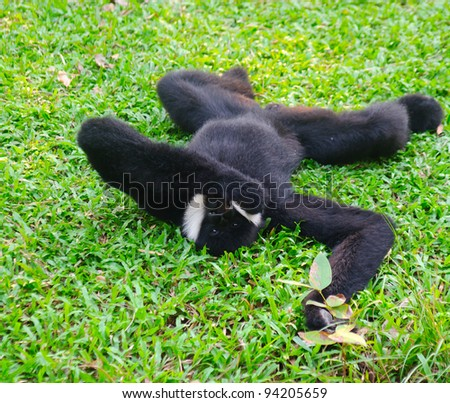 Related pictures finger monkey for sale in