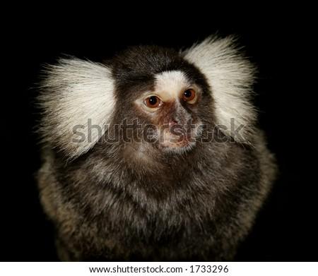 Cute night monkey - photo#23