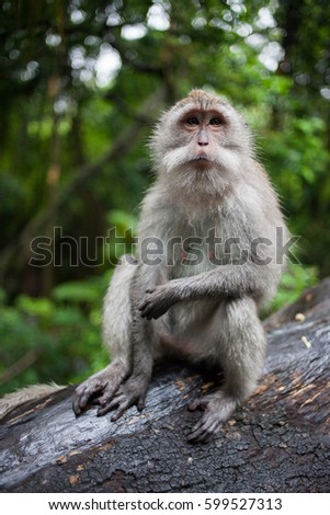 Monkey seating in the forest on a tree.
