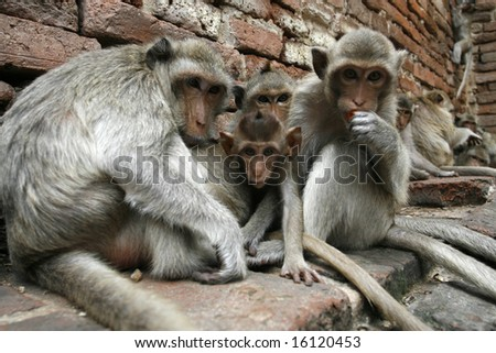 monkeys family in a park at Asia