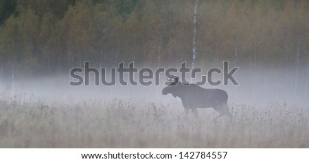 Amazing 502 World Record Bull Elk?   King's Outdoor World Blog