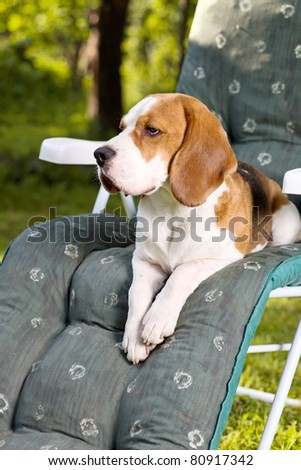 Morning. A dog on a chair.