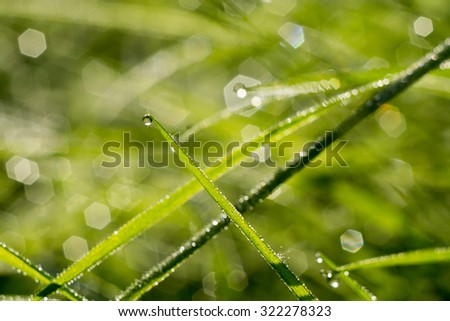 Morning green grass with drops of water, macro photo with bokeh lights background.
