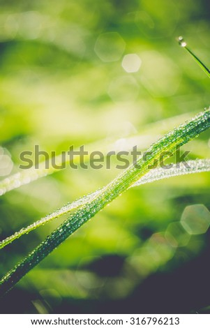 Morning green grass with drops of water, macro photo with bokeh lights, vintage background.