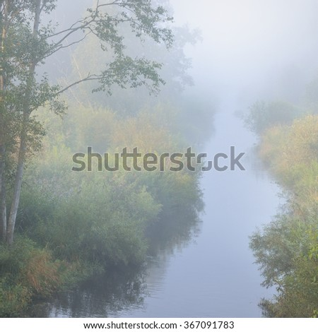 Morning river and a forest river