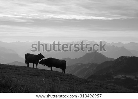 Morning scene on the Rigi, cows and mountains