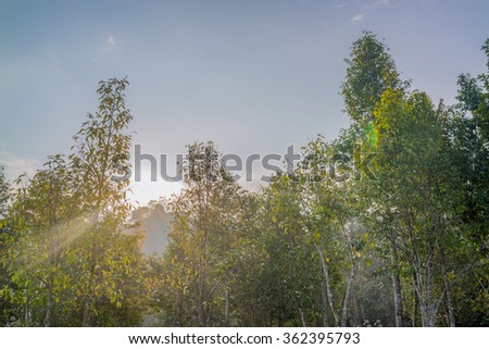 Morning sunlight on treetops in deep forest.
