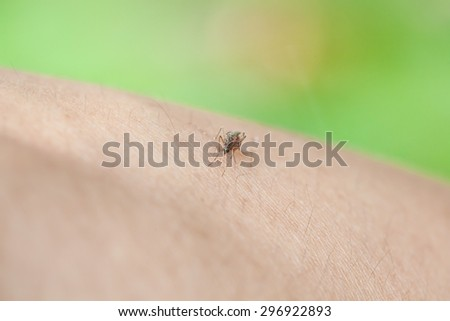 Mosquito sucking blood on human skin with nature background