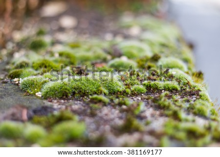 Moss in the street