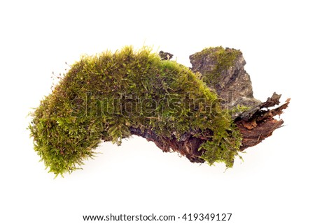 moss on driftwood on a white background